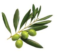 Organic Olive Leaf Extracts (20% Oleuropein)
